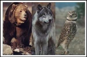 wildlife-lg